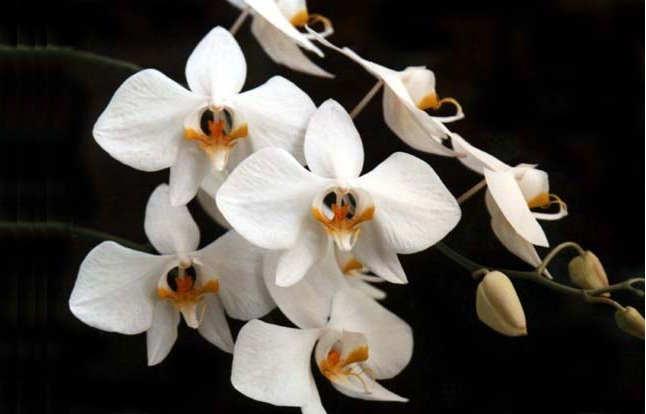 Gambar Cara Merawat Bunga Anggrek agar Tidak Mati