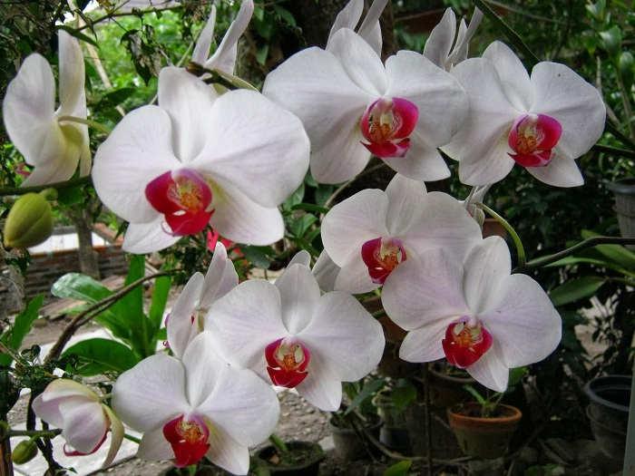 Gambar Cara Merawat Bunga Anggrek