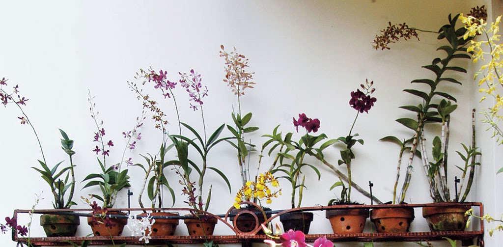 Gambar Cara Merawat Tanaman Bunga Anggrek Dalam Pot