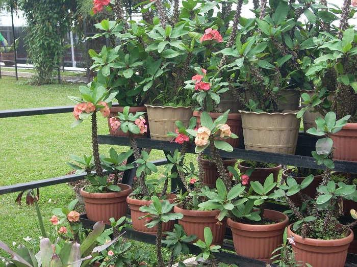 Gambar Cara Merawat Tanaman Bunga Dalam Pot dengan Rak