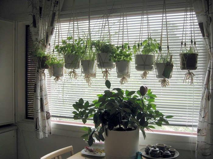 Gambar Cara Merawat Tanaman Bunga Dalam Pot di Dalam Rumah