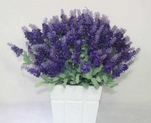 Gambar Cara Menanam Bunga Lavender dalam Pot
