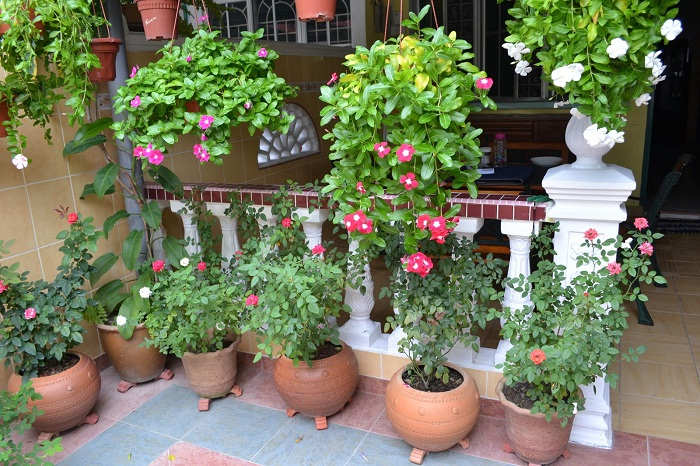 Gambar Cara Menanam Tanaman Bunga Halaman Depan Rumah
