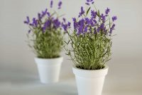 Gambar Cara Merawat Bunga Lavender Dalam Pot