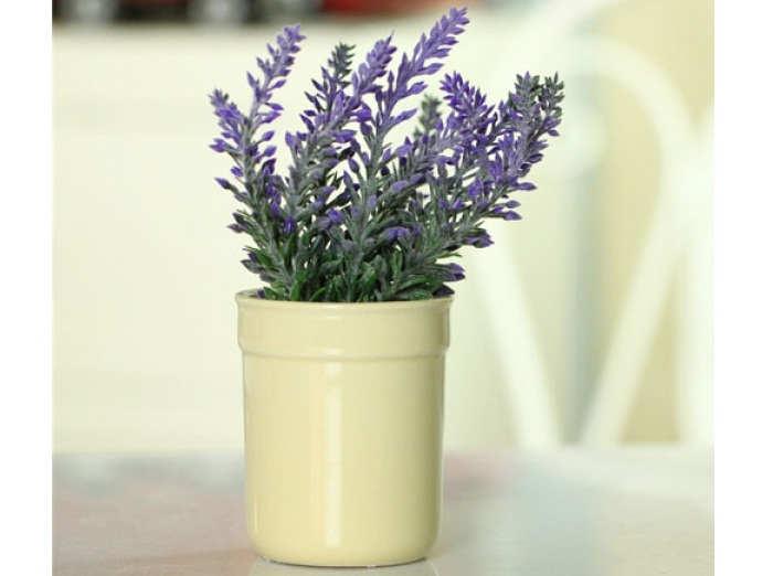 Gambar Cara Merawat Bunga Lavender