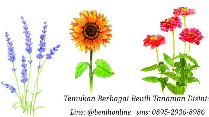 Gambar Foto Jual Bibit Benih Online