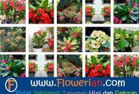 Foto Berbagai Macam Cara Merawat Bunga Euphorbia