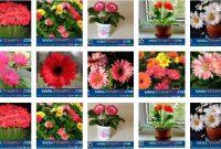 Foto Berbagai Macam Cara Merawat Bunga Gerbera