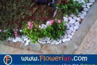 Gambar Foto Cara Merawat Bunga Soka Taman Rumah