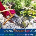 Gambar Foto Cara Merawat Bunga Teratai Cepat Berbunga di Kolam Ikan
