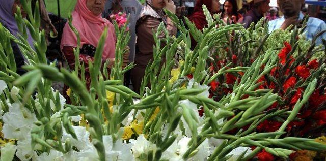 Gambar Foto Cara Menanam Bunga Sedap Malam untuk Dijual