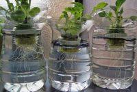 Gambar Foto Menanam Hidroponik Dengan Media Air Menggunakan Botol