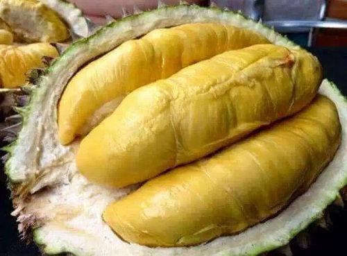 Gambar Foto Cara Menanam Durian Montong yang Baik dan Benar