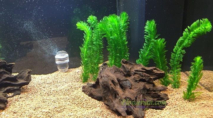 Gambar Foto Cara Menanam Egeria Densa Sebagai Penghias Aquarium