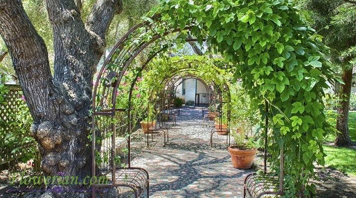 Gambar Foto Cara Menanam English Ivy untuk Hiasan Taman