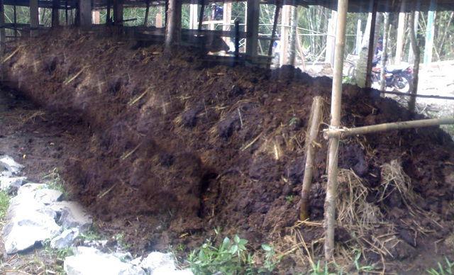 Gambar Foto Cara Pembuatan Pupuk Organik Padat dari Kotoran Sapi yang Baik dan Benar