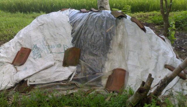 Gambar Foto Cara Pembuatan Pupuk Organik Padat dari Kotoran Sapi yang Pas Takaran