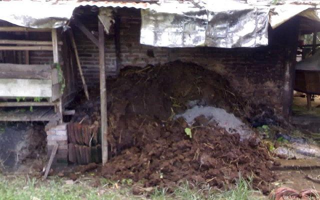 Gambar Foto Membuat Pupuk Organik Padat dari Kotoran Sapi