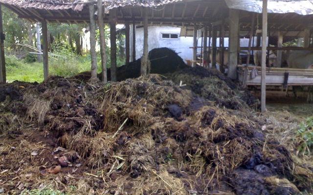 Gambar Foto Pupuk Organik Padat dari Kotoran Sapi yang Mudah