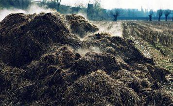 Gambar Foto Cara Membuat Pupuk Organik Padat dari Kotoran Sapi yang Baik dan Benar serta Mudah