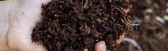 Gambar Foto Cara Penggunaan Pupuk Organik Padat di Lahan Kebun Rumah