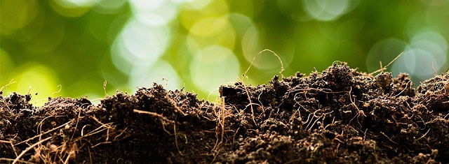 Gambar Foto Dosis Penggunaan Pupuk Organik Padat Buatan Sendiri