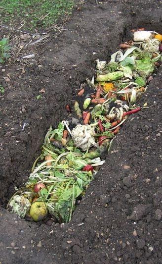 Gambar Foto Dosis Penggunaan Pupuk Organik Padat di Kebun