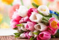 Gambar Foto Bunga Tulip Cara Menanam Merawat dan Manfaatnya