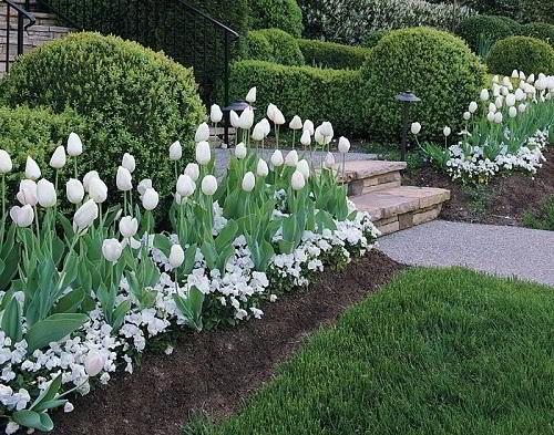Gambar Foto Bunga Tulip di Kebun Rumah
