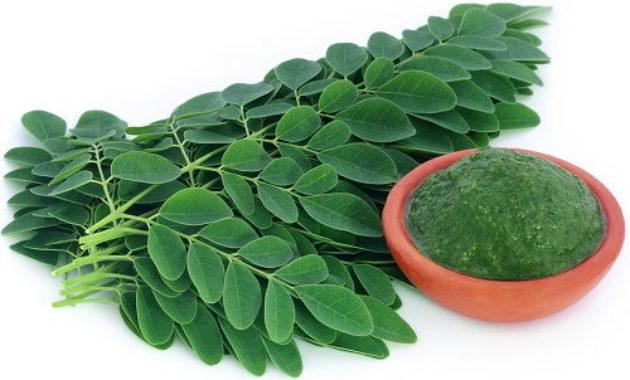 Gambar Foto Khasiat Daun Kelor Untuk Asam Urat secara Herbal
