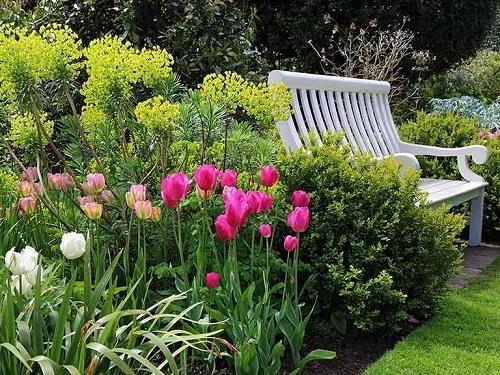 Gambar Foto Membuat Taman dengan Bunga Tulip