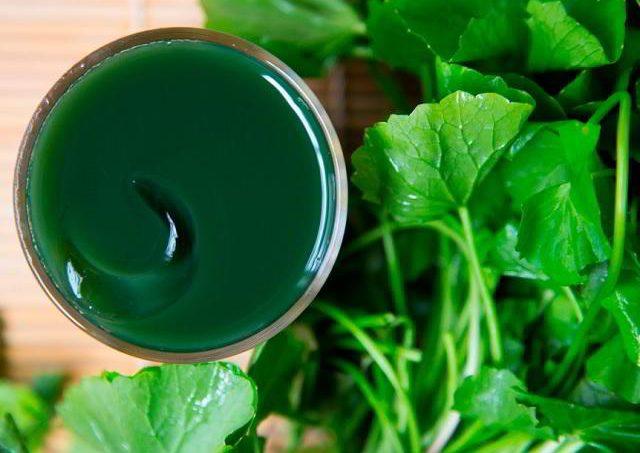 Gambar Foto Manfaat Daun Pegagan sebagai Obat Herbal