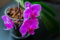 Gambar Foto Jenis Bunga Anggrek di Dunia dan Indonesia